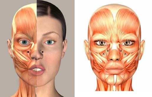gummy-smile-botox-anatomie-jc-kliniek